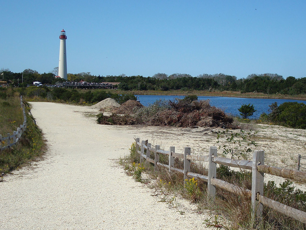 Cape May, New Jersey - Lakeshore Nature Tours